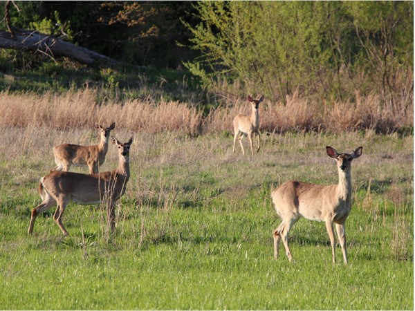 Whitetail Deer season is upon us. Hunting in the mountains and valleys of LeFlore County