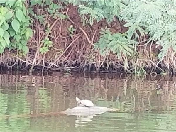 Turtle enjoying the sunshine at Crowder Lake
