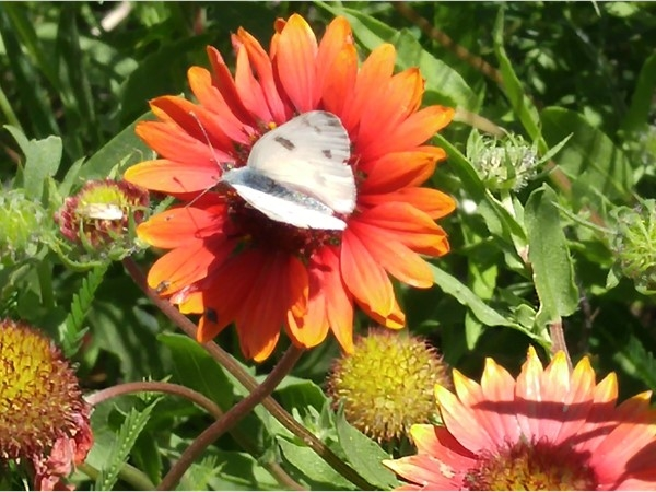 Enjoy the pollinating garden compliments of the US Forest Service