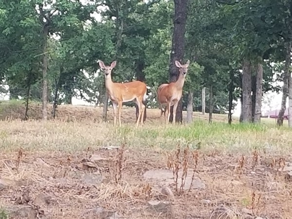 Special visitors stopped by the farm