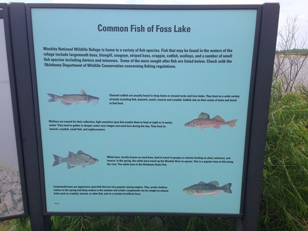 Great fishing at Foss Lake for all ages
