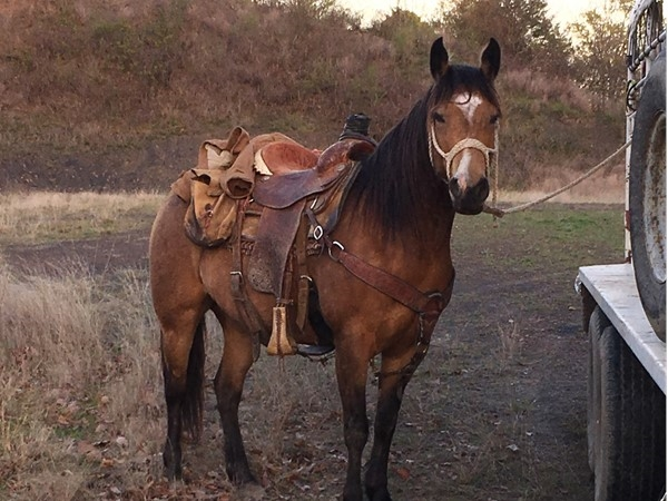 Southeastern Oklahoma hog hunt with a fine pony and a good Englishhound in Leflore County