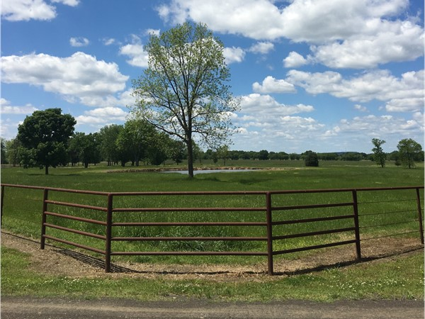Beautiful green pasture on an Arkansas River ranch in Leflore County