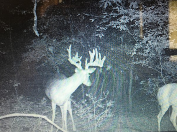 It's about that time in Southeast Oklahoma! The velvet is about to fall off