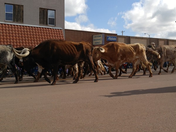 Longhorns take over the streets during Old Settlers Days