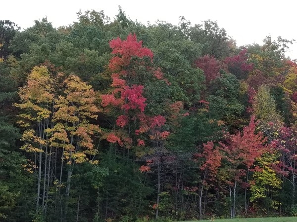 Fall foliage.... absolutely beautiful this time of year