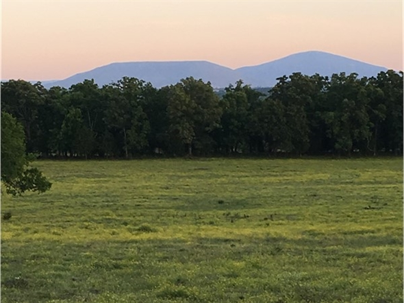 Cattle country with Sugar Loaf in the background right here in the Heartland