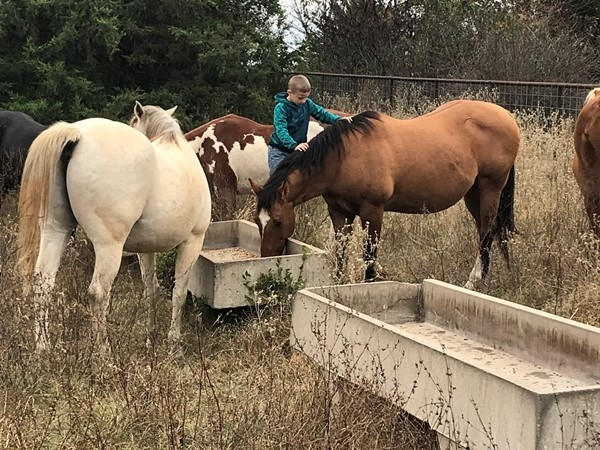 Feeding horses on the farm in LeFlore County