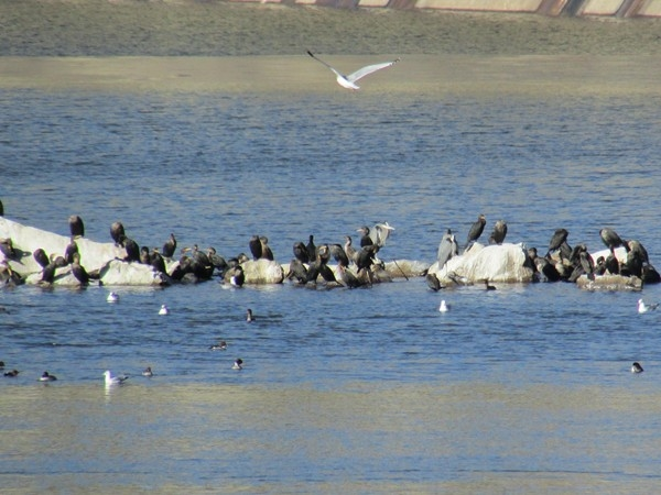 Wildlife on beautiful Fort Gibson Lake