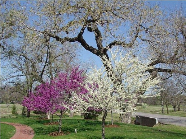 Beautiful spring views at the parks in Nichols Hills