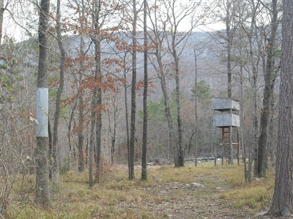 Bear hunting in Southeastern Oklahoma
