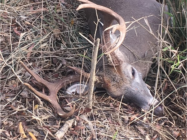 Haskell County big Bucks are starting to hit the ground in Southeastern Oklahoma