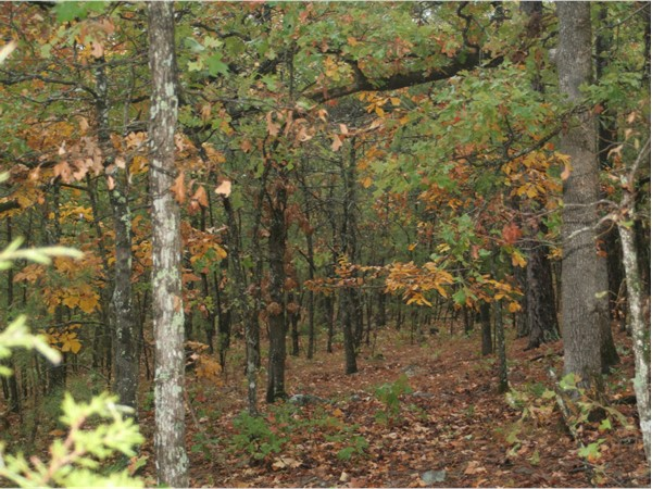National Forest in Eastern Oklahoma