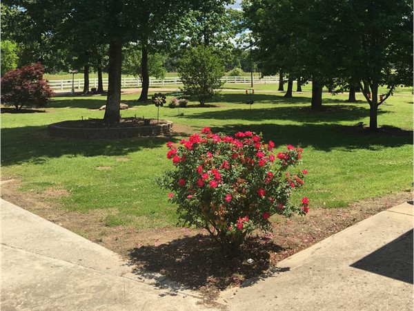 Beautiful front yard on an Arkansas River ranch in Leflore County