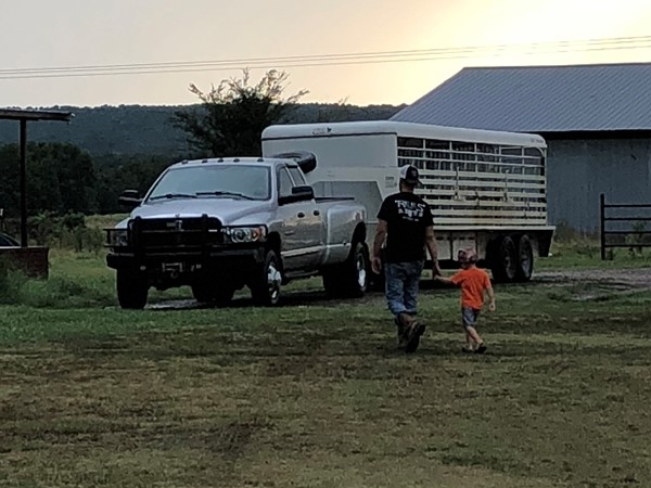 Cattle hauling in the South. Teaching them young. Weaning and selling.  Farm life