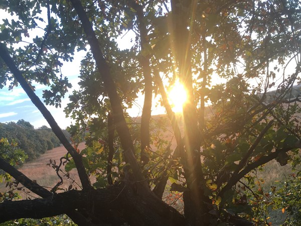 Another beautiful tree stand sunrise in God's Country Southeastern OK