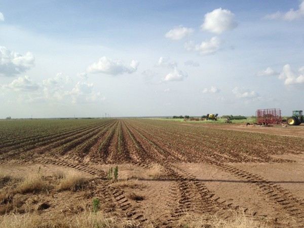 Cotton season is starting