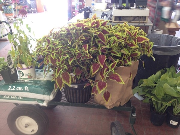 Shopping for plants Memorial Day? Please visit locally owned TLC in NW Oklahoma City