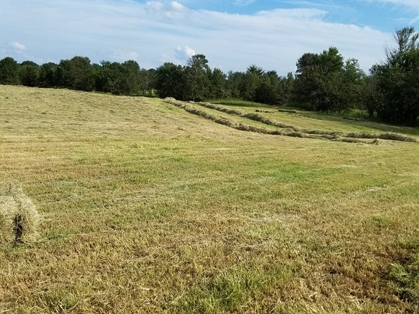 Beautiful day in Leflore County  in Southeastern Oklahoma.  Hay is curing and baling up great