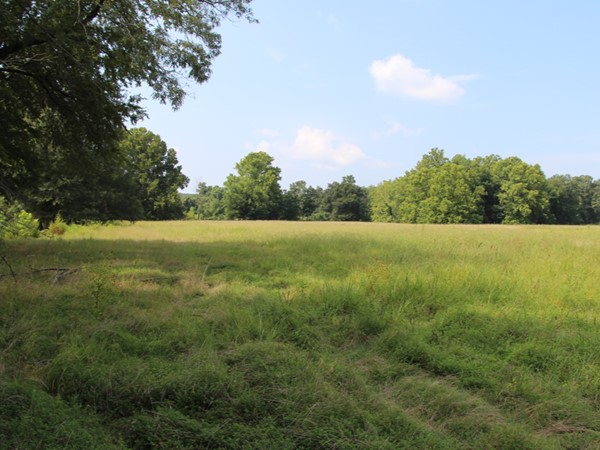 Pastureland, beautiful skies and plenty of cattle grazing
