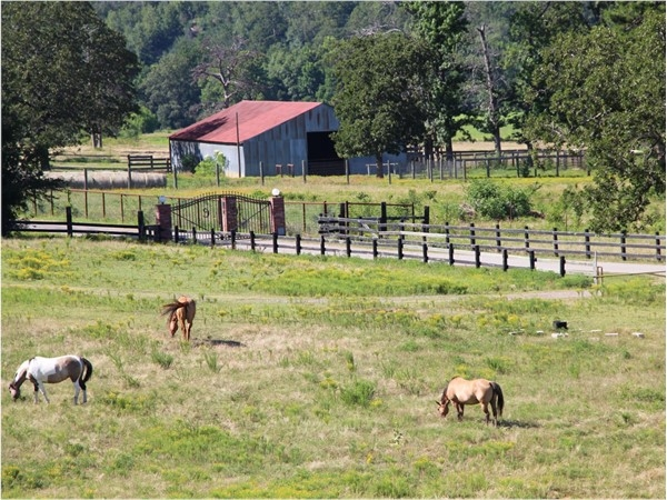 Horse country - Blackfork River - Hodgen