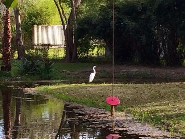 Backyard visitors in Old Covington!
