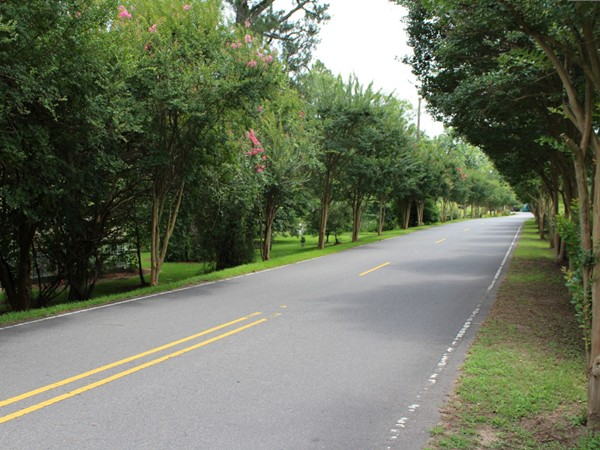 A beautiful view down Country Club Rd. leading to the beautiful homes found in Country Club Place