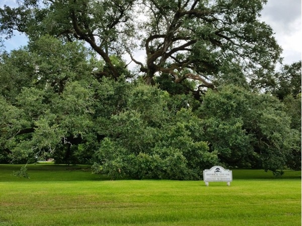 Historic live oak at the entrance of Jefferson Crossing. Great location in Prairieville