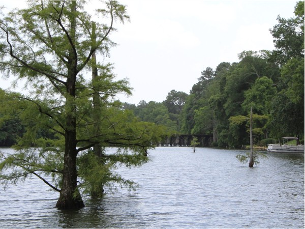 Cypress trees and a lush bayou can be seen from homes in Bayou DeSiard