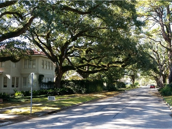 Tree Lined Streets In The Garden District Baton Rouge La