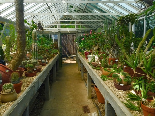 The Succulent Greenhouse In City Parks Botanical Garden