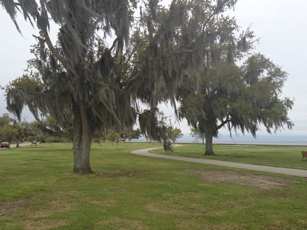 Mandeville lakefront makes for a great exercise day with its old majestic oaks