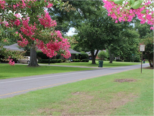 Gorgeous landscaping and towering trees can be found in the Plantation Park neighborhood