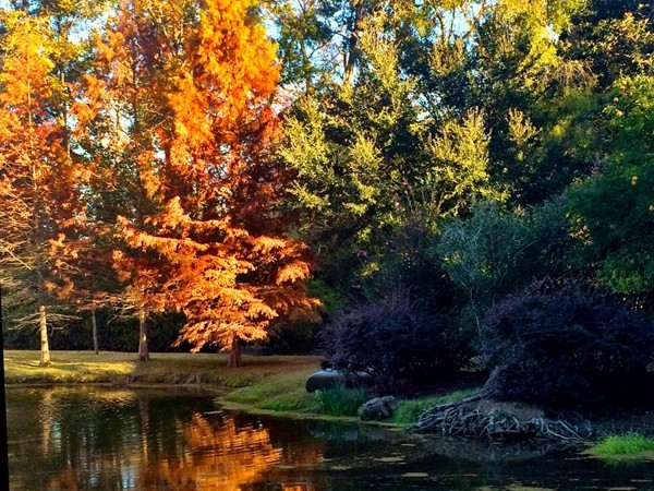 """Fall"" in love with Covington"