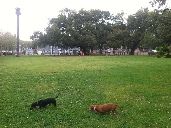Samual Square Park is a great place in Uptown New Orleans to walk your dogs!