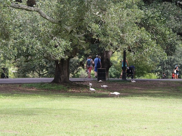 Fowl and families sharing the same path in Audubon Park