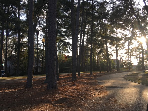 Beautiful homes and tree lined streets makes South Highlands a great neighborhood to call home