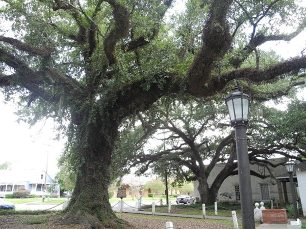 Another view of historic Evangeline Oak Park