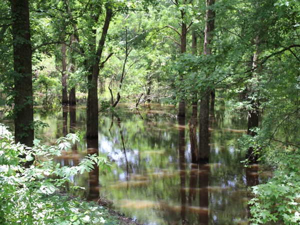 Gorgeous views of the bayou can be found in Pargoud Place