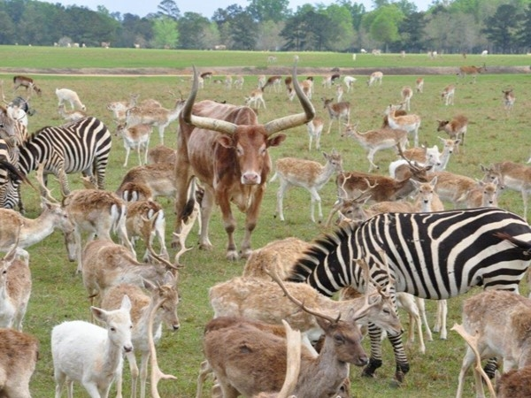 Global Wildlife. Home to over 4,000 exotic, endangered/ threatened animals from all over the world