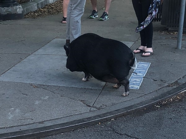 You never know who you will see out for a stroll on Frenchmen Street. Only in New Orleans