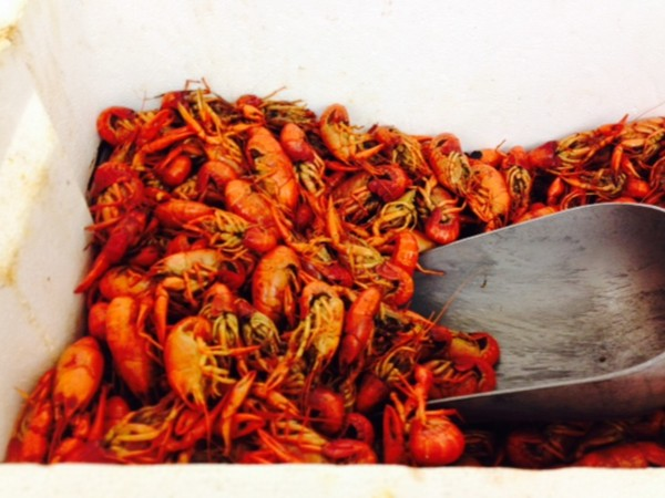 Yum! Yum! Crawfish found at local grocery stores