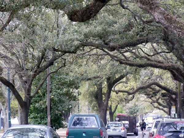 Carrollton Avenue is a major artery made picturesque by the canopy of ancient oak trees