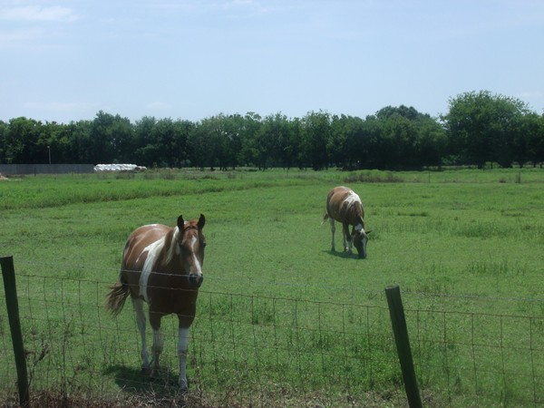 Country living in Erath