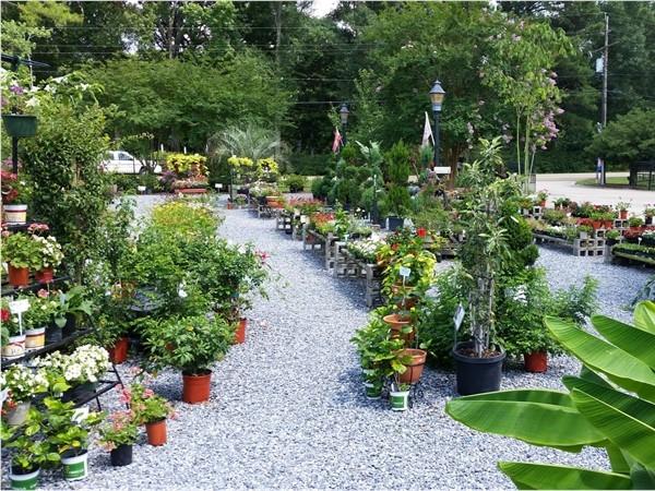 D's Garden Center on Pecue is located near Kensington Estates