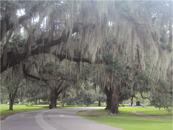 Audubon Park has a walking and bike trail under a canopy of live oaks