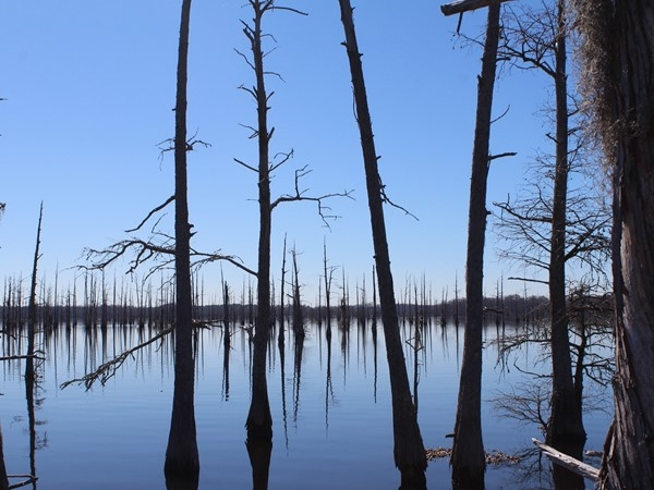 The Black Bayou National Wildlife Refuge features gorgeous views of the bayou and nature