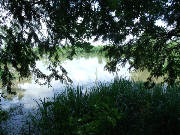 Fausse Pointe State Park offers beautiful views