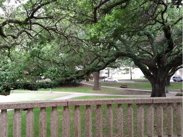 Oak trees line the exterior of LSU's Student Union