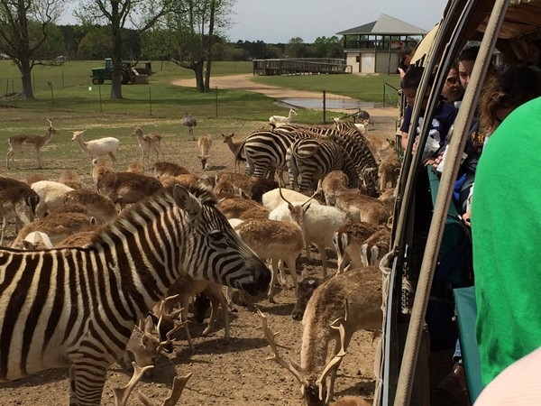 Global Wildlife Center is a remarkable experience in Folsom